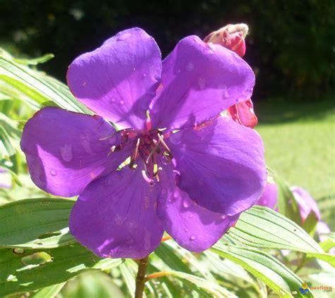 Fleur Violette by Photo Fleur Violette
