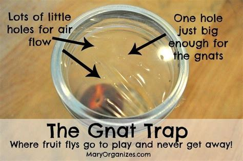 gnat trap cool ideas gnat traps