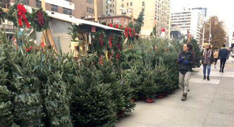 the christmas tree sellers in nyc they re from quebec