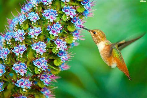 imagenes de flores que parecen animales koliber kwiatki
