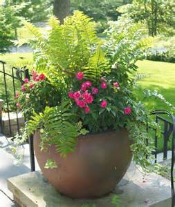 ferns planters and terra cotta on