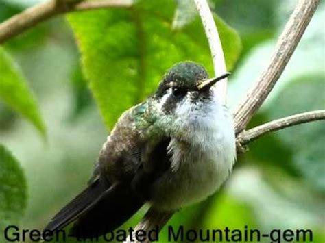 guatemala birdwatching birds guatemala lake atitlan