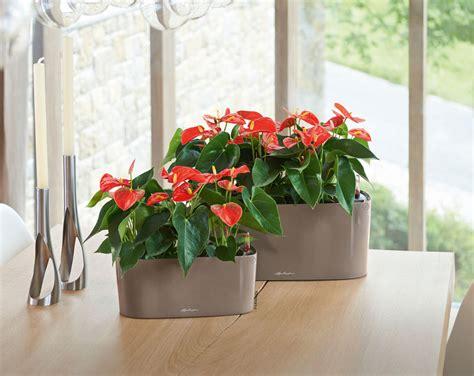 indoor windowsill planter windowsill planter delta 20 self watering pot gardeners