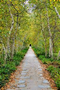 birch pathway perspective by kristin elmquist