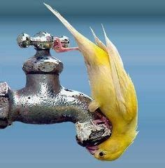 Yellow Water Coming Out Of Faucet by Lustige Bilder Pins Pins Bilder Anderen Usern On Faucets Images And