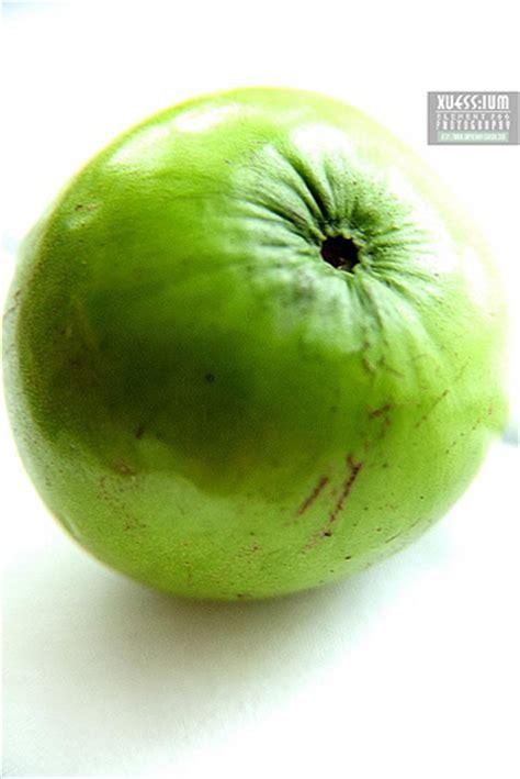 apple vietnam vietnamese apple malus doumeri flickr photo sharing