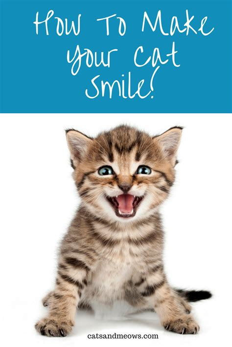 how to your to smile how to make your cat smile cats and meows