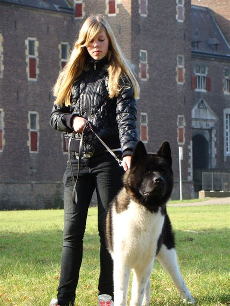 american akita 136 best images about american akita on brooches beautiful dogs and show