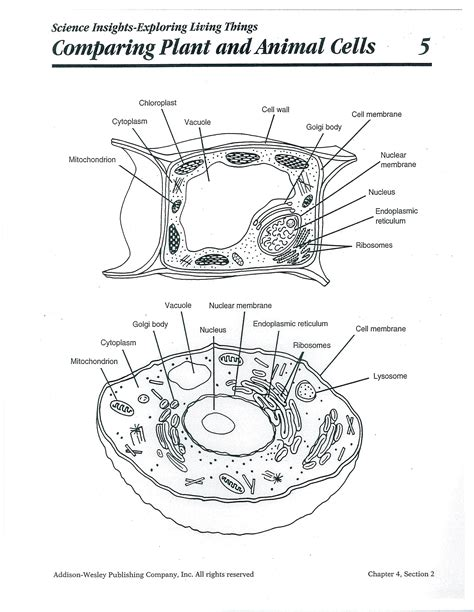 Printable Animal And Plant Cell Quiz | printable plant and animal cell plant and animal cell