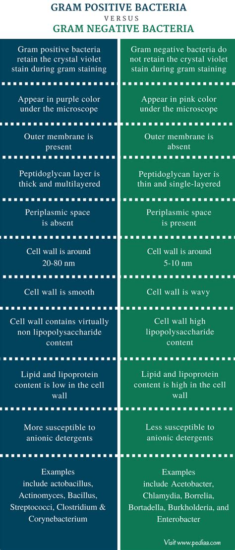 what color is gram positive difference between gram positive and gram negative