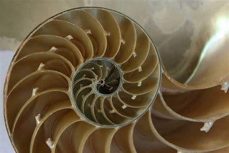 geometric pattern found in nature poetry prompt the golden ratio the found poetry review