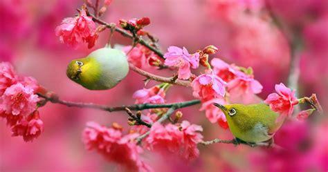 imagenes de flores de 400 x 150 japanese white eye birds 4k ultra hd wallpaper