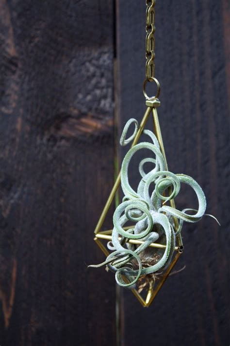 Tillandsia Fuego By Fab Outlet 17 best images about tillandsia on planters