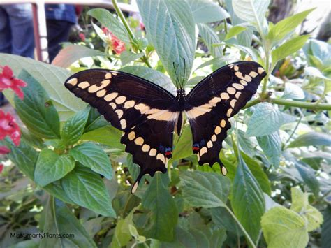 Uf Butterfly Garden by Butterfly Rainforest At The Of Florida Miss