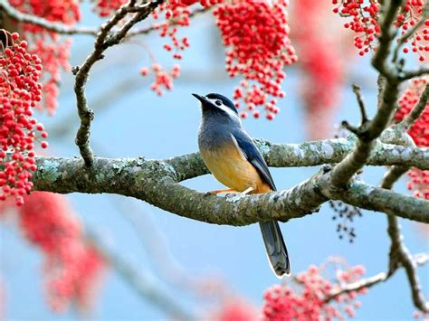 pinterest wallpaper birds beautiful birds hd wallpapers http whatstrendingonline