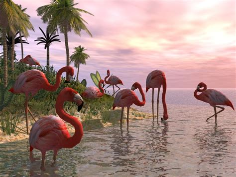 flamingo heaven wallpaper 1000 images about flamingo obsession on pinterest