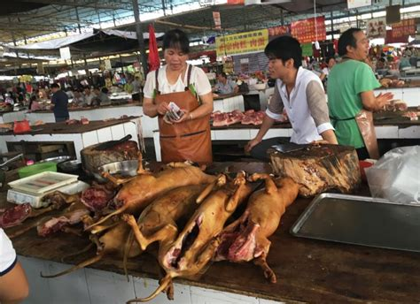 yulin festival in china china s yulin festival hasn t banned after all metro news