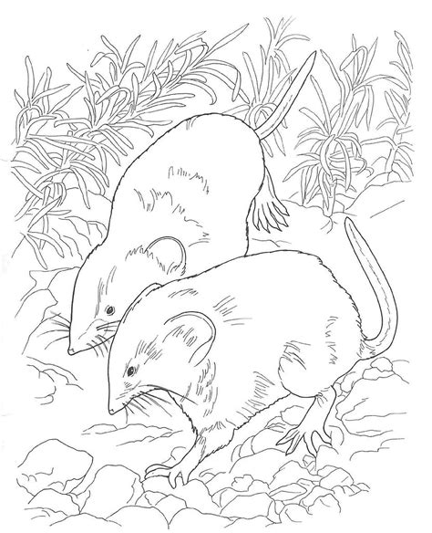 free desert plants coloring pages