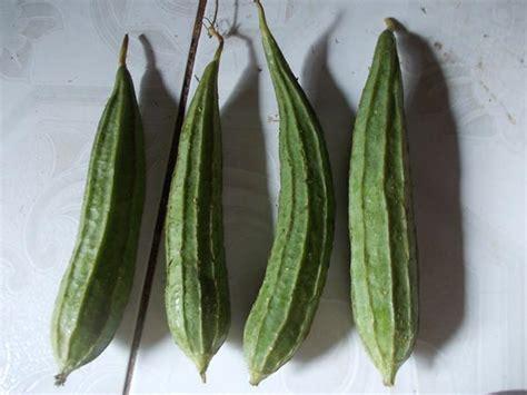cara membuat yuyu menjadi gembur resep sayur oyong soun bening yang lezat
