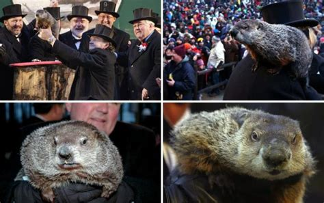 groundhog day quotes prognosticator groundhog day 2014 prediction shadow winter to continue