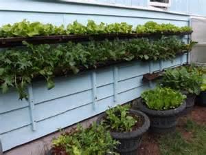 Gutter Garden by Lessons Learned From Gutter Gardening Juneau Empire