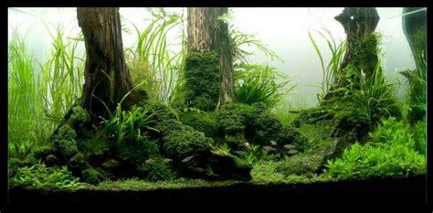 best substrate for aquascaping planted aquarium substrate hubpages