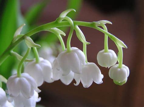 fiori varietà fiori primaverili fiori delle piante variet 224 fiori