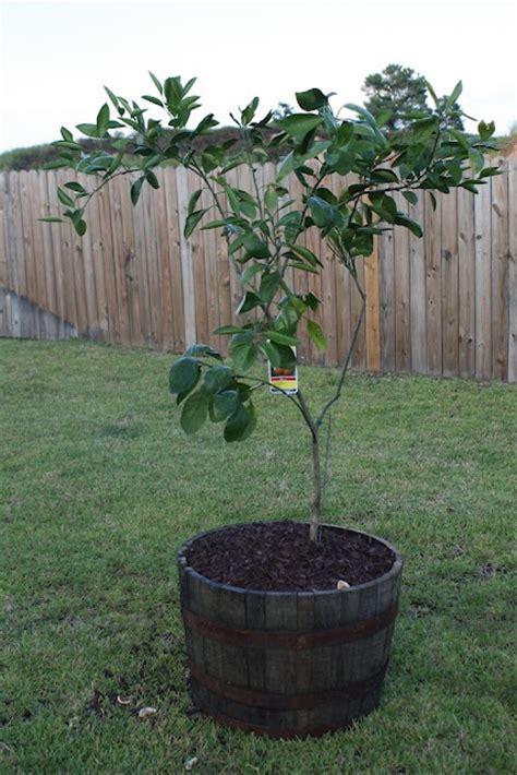 Oak Barrel Planter Ideas by 1000 Images About Barrel Planter Ideas On