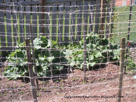 Trellis Peas farmer s garden weaving the pea trellis