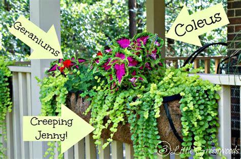 Best Plants For Hanging Planters by Hometalk 17 Hanging Flower Basket Tips Tricks And
