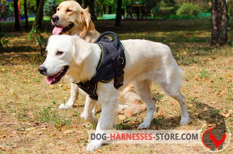 best harness for golden retriever golden retriever harness for pulling walking and h12 1092