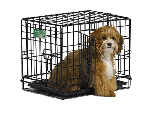 havanese crate purdypuppy crate exercise pens and royal canin food for sale