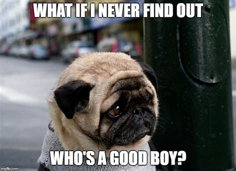 Pug Memes 8 Pug Memes What Every Deserves