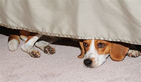 why does my dog sleep under the bed dog under the bed www pixshark com images galleries with a bite