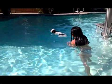shih tzu swimming shih tzu puppy 1st time swimming