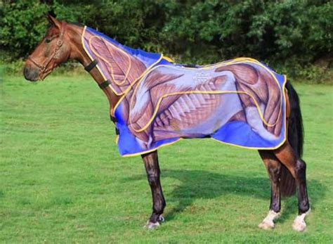 magnetic therapy rugs for horses magnetic rugs for horses roselawnlutheran
