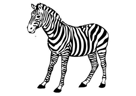 imagenes de cebras para dibujar faciles dibujo para colorear cebra img 17394