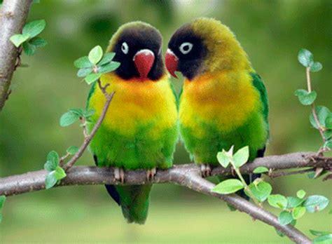 imagenes bonitas de animales que se mueven 12 im 225 genes que se mueven de pajaritos im 225 genes que se