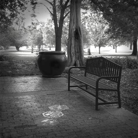 White And Black Bench Garden Bench Black And White Photograph Photograph By