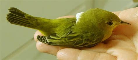 native bird care blog native bird care of sisters oregon