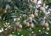 Racun Furadan Malaysia anim agro technology bacang