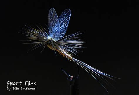 flight pattern of house flies reel wings parachute dry fly smart flies