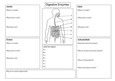 All About Enzymes Worksheet Answers
