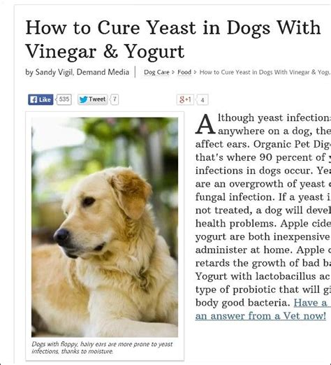 yeast infections in dogs 1000 ideas about cure yeast infection on