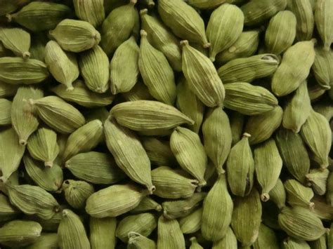 green cardamom pods fresh large pods elettaria cardamomum elaichi best buy ebay