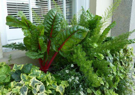 window box vegetable garden vegetables garden in window boxes www coolgarden me