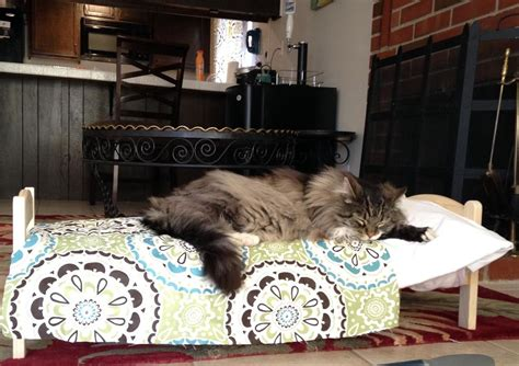 when were beds invented 19 cats who understand doll beds were invented just for them