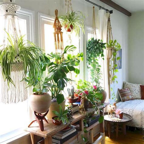 window hanging plants indoor design 24 spaces