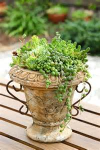tray of succulent ground cover jennifer s mentionables