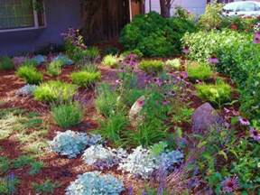 drought resistant landscaping drought tolerant landscaping ideas how to choose the